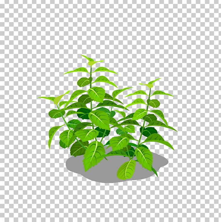 Mint PNG, Clipart, Adobe Illustrator, Branch, Download, Encapsulated Postscript, Euclidean Vector Free PNG Download