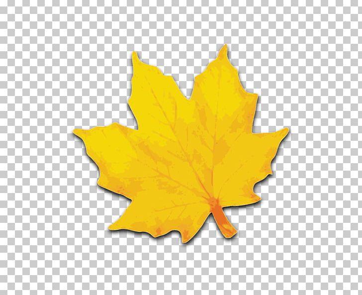 Sugar Maple Maple Leaf Yellow PNG, Clipart, Autumn, Autumn Leaf Color, Color, Flowering Plant, Leaf Free PNG Download