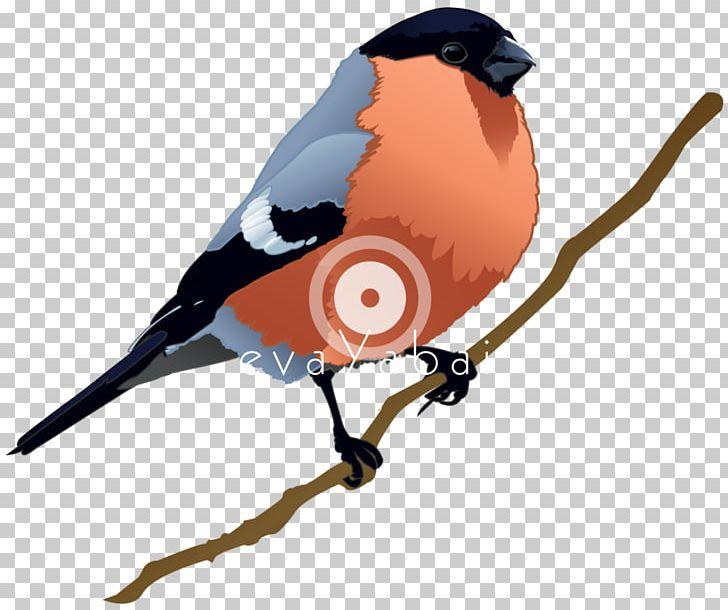 Bird Beak PNG, Clipart, Animals, Beak, Bird Free PNG Download