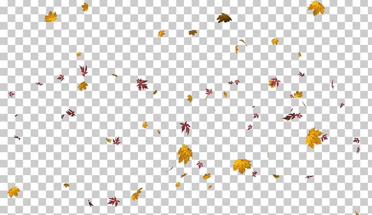 Petal Leaf Flower Home Accessories Plants PNG, Clipart, Color, Computer, Computer Wallpaper, Desktop Wallpaper, Download Free PNG Download