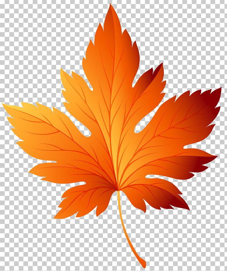 Autumn Leaf Color PNG, Clipart, Autumn, Autumn Leaf Color, Autumn Leaves, Clip Art, Color Free PNG Download