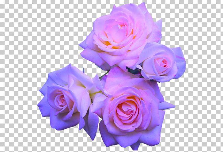 Rose Flower Purple Pink PNG, Clipart, Blue, Color, Cut Flowers, Floribunda, Flower Free PNG Download