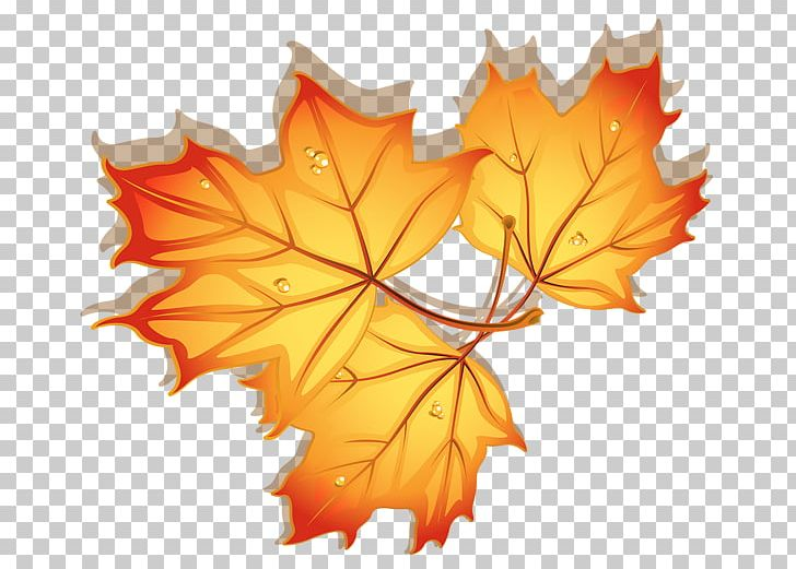 Maple Leaf Autumn PNG, Clipart, Animation, Autumn, Autumn Leaf Color, Autumn Leaves, Blog Free PNG Download