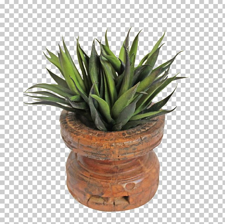Succulent Plant Flowerpot Houseplant Agave Wood PNG, Clipart, Agave, Aloe, Aloe Vera, Antique, Design Mix Furniture Free PNG Download