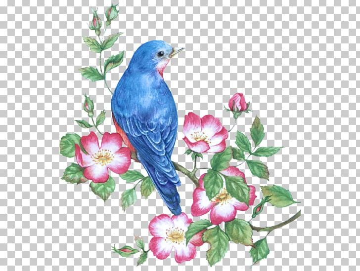 Bird Watercolor Painting Drawing PNG, Clipart, Animals, Art, Beak, Bird, Bird Nest Free PNG Download
