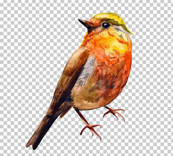 Bird Watercolor Painting Drawing PNG, Clipart, 123rf, Beak, Bird, Cartoon, Drawing Free PNG Download