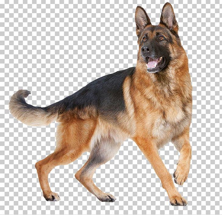 Cat Food German Shepherd Royal Canin Breed Png Clipart