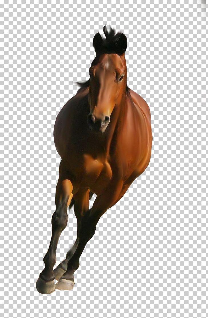 Shire Horse Belgian Horse Friesian Horse Mustang Stallion Png Clipart Bit Bridle Computer Icons Desktop Wallpaper