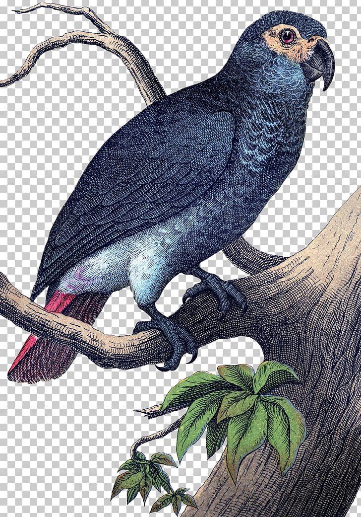 Beak Parrot Bird Finch Woodpecker PNG, Clipart, Antique, Bag, Beak, Bird, Bird Of Prey Free PNG Download