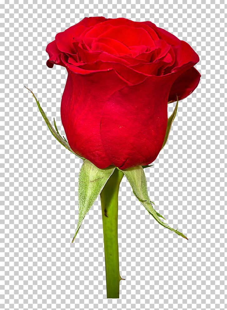 Rose Flower Bouquet PNG, Clipart, Blue Rose, Cut Flowers, Display Resolution, Floristry, Flower Free PNG Download