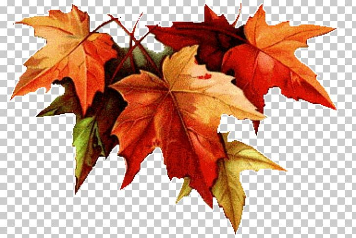 Autumn Leaf Color Drawing Colored Pencil PNG, Clipart, Art, Autumn, Autumn Leaf Color, Botanical Illustration, Color Free PNG Download