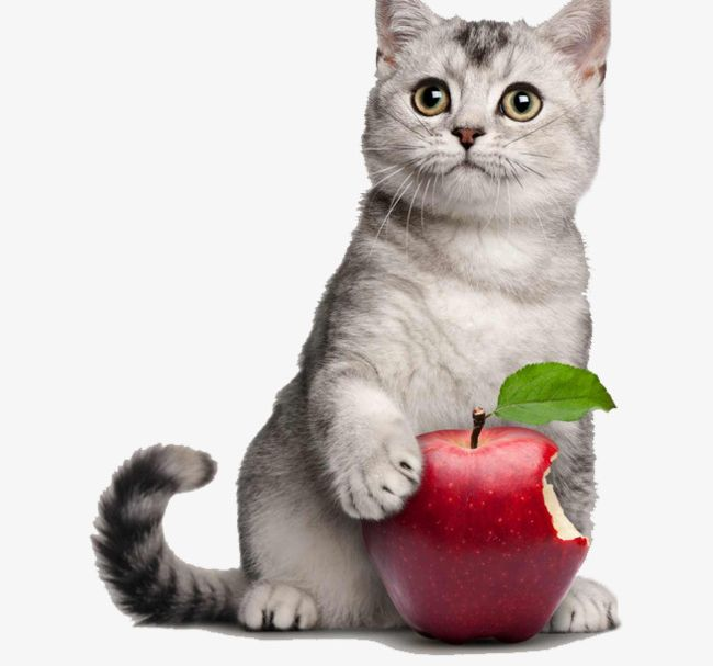 0baa26e6d6644 Cute Kitten Holding Apple PNG, Clipart, Apple, Apple Clipart, Apple ...