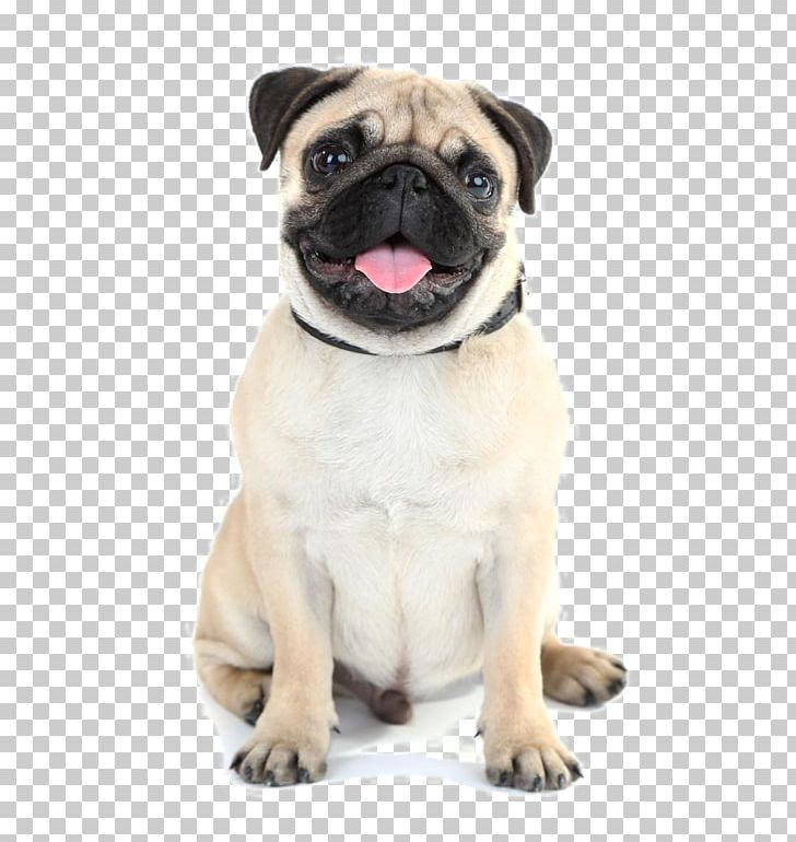 Puppy dog cartoon clipart free stock photo public domain pictures -  Cliparting.com