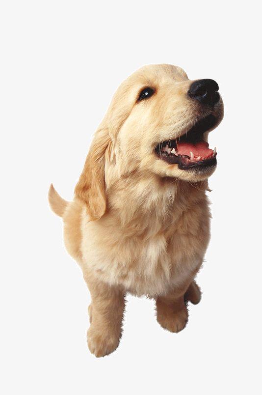 Cute Dog PNG, Clipart, Animal, Biological, Cute Clipart, Cute Clipart, Dog Clipart Free PNG Download