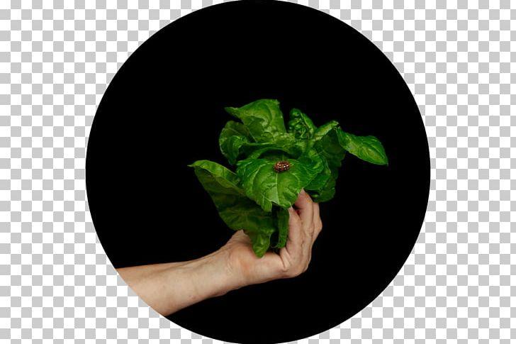 Leaf Herb PNG, Clipart, Dumplings, Herb, Leaf, Love, Plant Free PNG Download