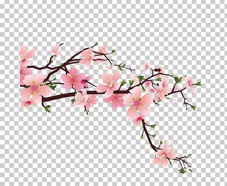 Cherry Blossom Drawing Png Clipart Artificial Flower Blossom Blossoms Branch Cherry Blossoms Free Png Download