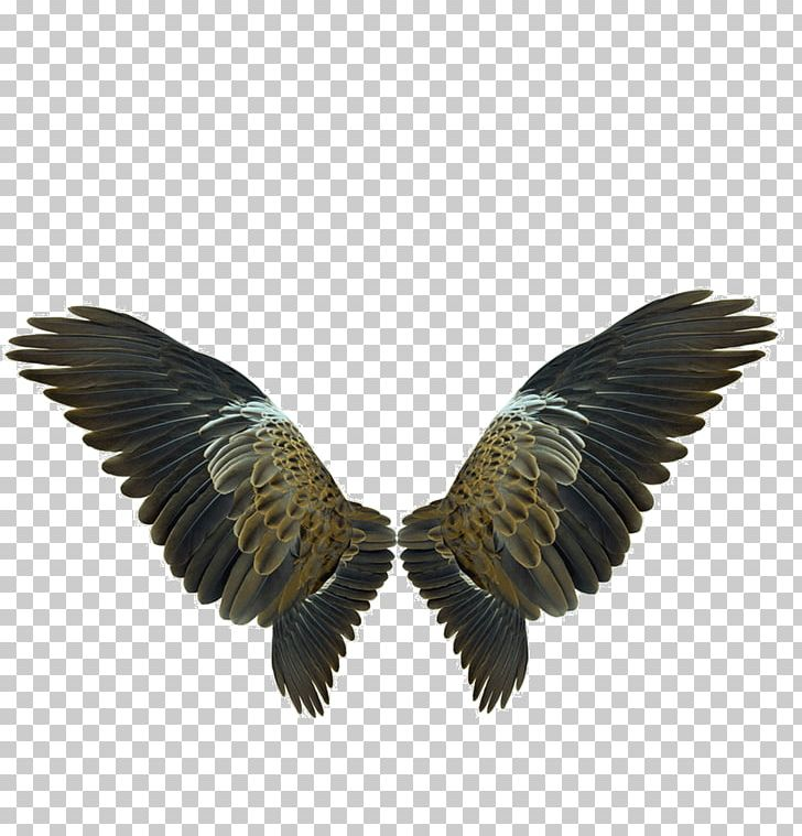 Wing Flight PNG, Clipart, Accipitriformes, Angel Wings, Beak, Beautiful Beautiful, Beautiful Sacred Free PNG Download