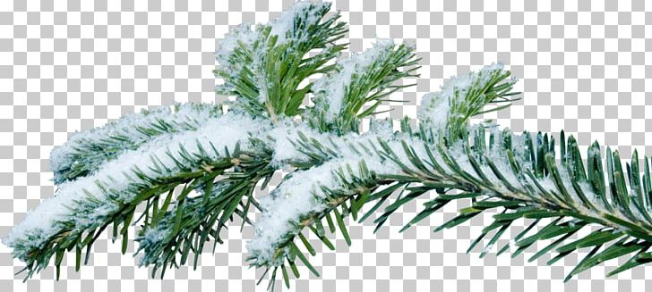 Christmas Branch Png.Christmas Tree Branch Fir Png Clipart Artificial Christmas