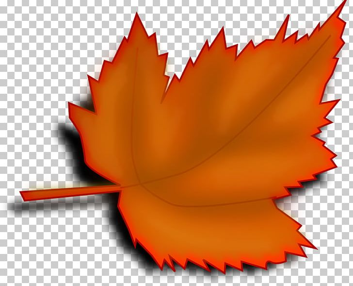 Autumn Leaf Color Trees And Leaves PNG, Clipart, Autumn Leaf Color, Drawing, Fall Leaf, Flower, Harika Free PNG Download