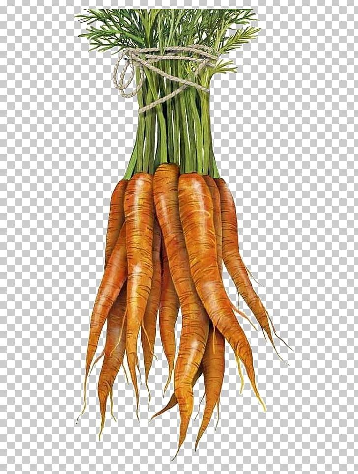 Baby Carrot Towel Vegetable PNG, Clipart, Bunch Of Carrots