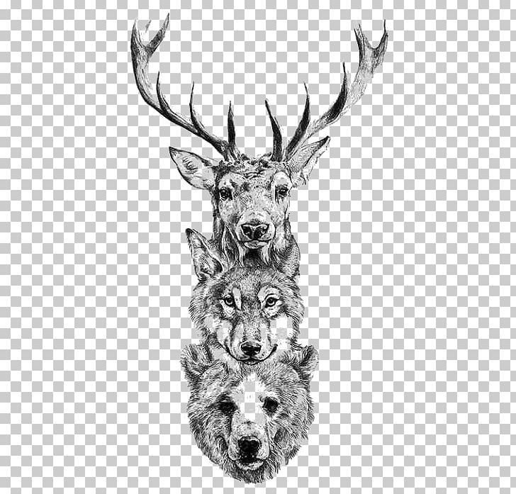 Deer Tattoo Bear Gray Wolf Drawing Png Clipart Animal