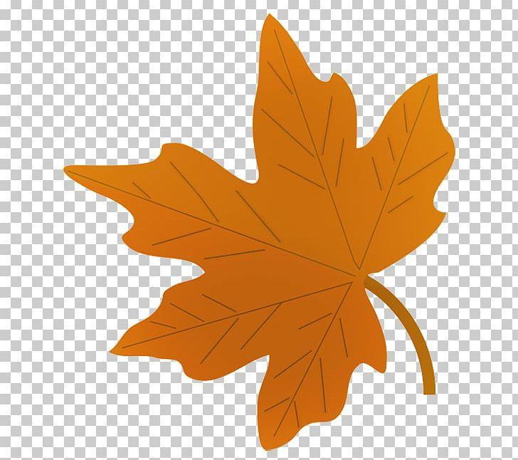 Drawing Autumn Leaf Color Maple Leaf PNG, Clipart, Art, Autumn, Autumn Leaf Color, Color, Desktop Wallpaper Free PNG Download