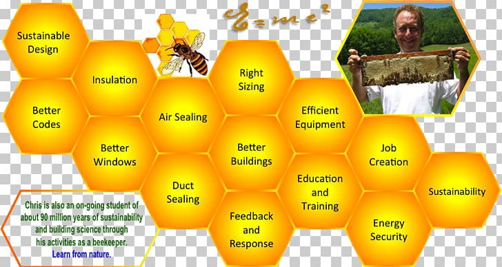 Honey Bee Science Fair Projects Science Project PNG, Clipart
