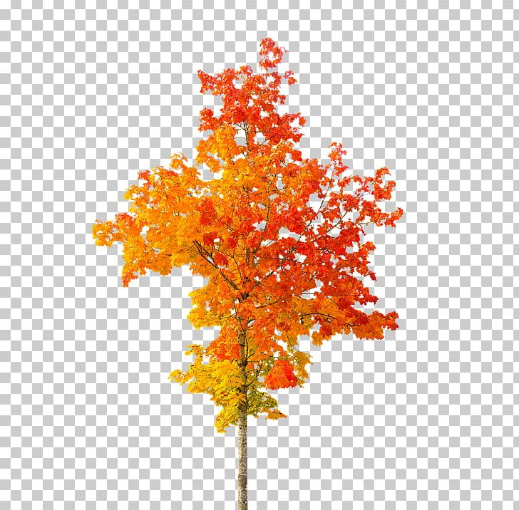 Autumn Leaf Color Tree PNG, Clipart, Autumn, Autumn Leaf Color, Branch, Desktop Wallpaper, Flowering Plant Free PNG Download