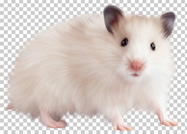Fluttershy CmapTools Rabbit Video PNG, Clipart, Animal