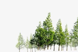 Forest Png Clipart Forest Forest Clipart Forest Clipart Trees Free Png Download You can download and print the best transparent forest hd images png collection for free. forest png clipart forest forest