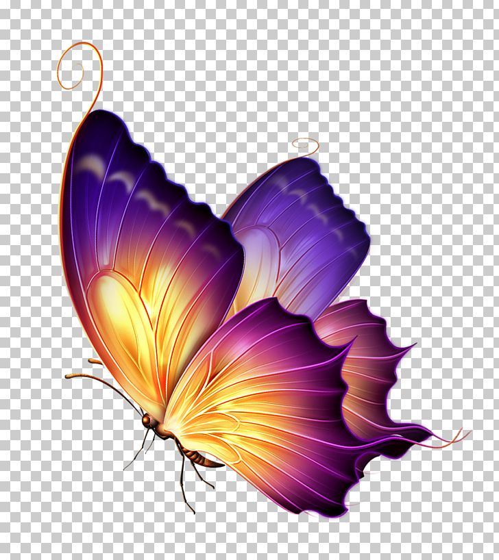 Butterfly Color Purple PNG, Clipart, Butterflies, Butterfly, Butterfly Group, Color, Flower Free PNG Download