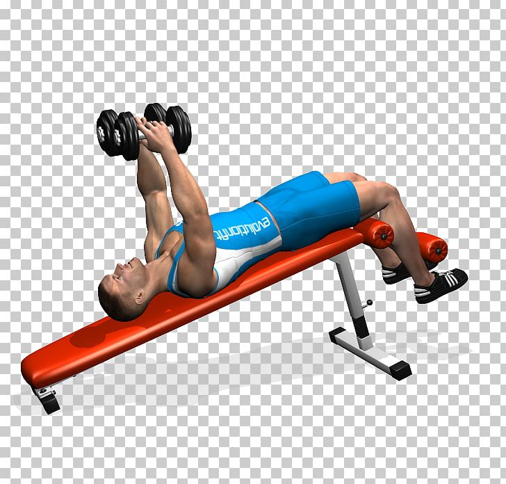 Prime Physical Fitness Bench Dumbbell Pectoralis Major Fly Png Pdpeps Interior Chair Design Pdpepsorg