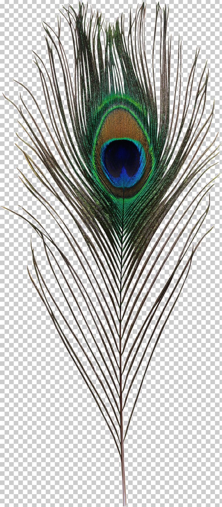 Bird Asiatic Peafowl Feather Simple Eye In Invertebrates PNG, Clipart, Animals, Asiatic, Asiatic Peafowl, Bird, Color Free PNG Download