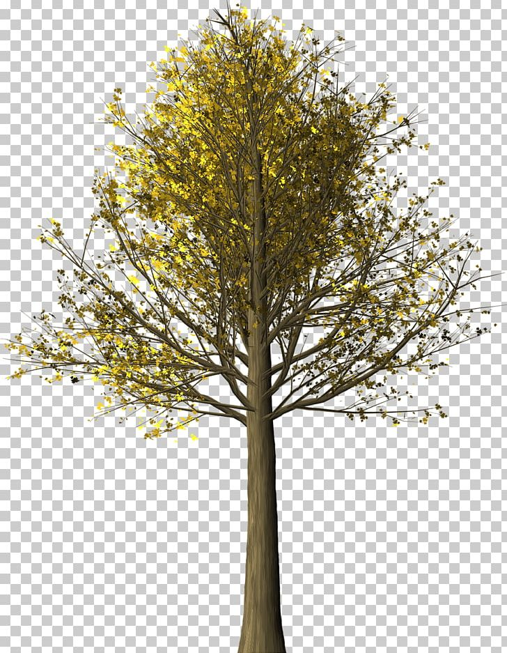 Tree Autumn Leaf Color Maple Leaf Woody Plant PNG, Clipart, Autumn, Autumn Leaf Color, Bark, Branch, Deciduous Free PNG Download