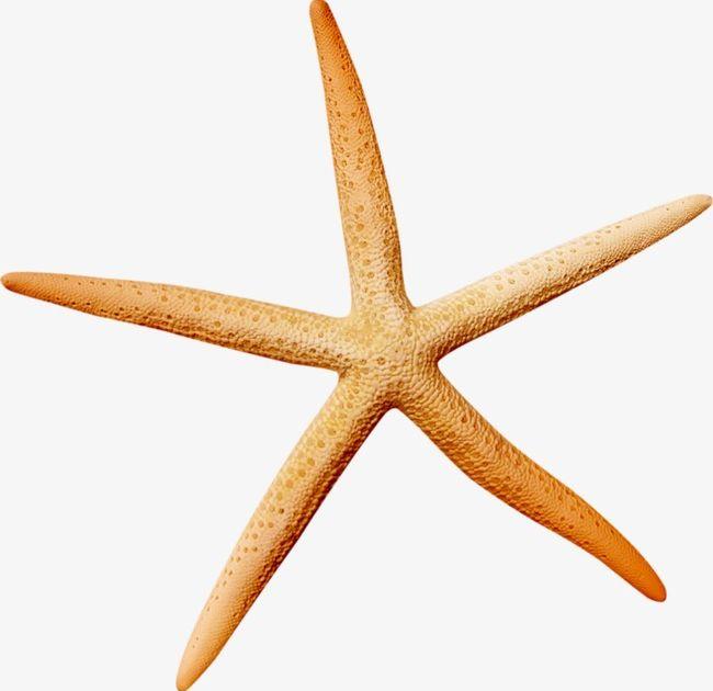 Ocean Starfish PNG, Clipart, Brown, Dream, Ocean, Ocean Clipart, Ocean Was Free PNG Download