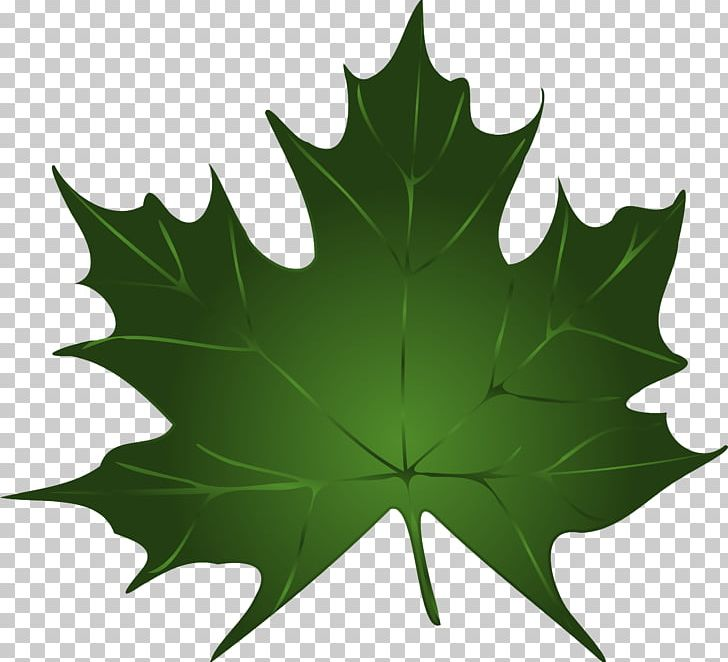 Maple Leaf Green Autumn Leaf Color PNG, Clipart, Autumn, Autumn Leaf Color, Canadian Gold Maple Leaf, Clip Art, Download Free PNG Download