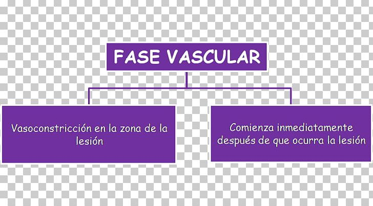 Hemostasis Blood Vessel Vasoconstriction Platelet PNG, Clipart, Angle, Area, Blood, Blood Vessel, Brand Free PNG Download