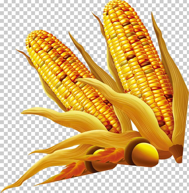 Maize PNG, Clipart, Adobe Illustrator, Big Ben, Big Cock, Big Dick, Big Sale Free PNG Download