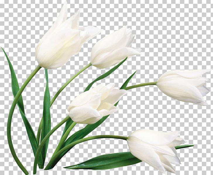Flower Bouquet Desktop Cut Flowers White PNG, Clipart, Blue, Bud, Common Daisy, Cut Flowers, Desktop Wallpaper Free PNG Download
