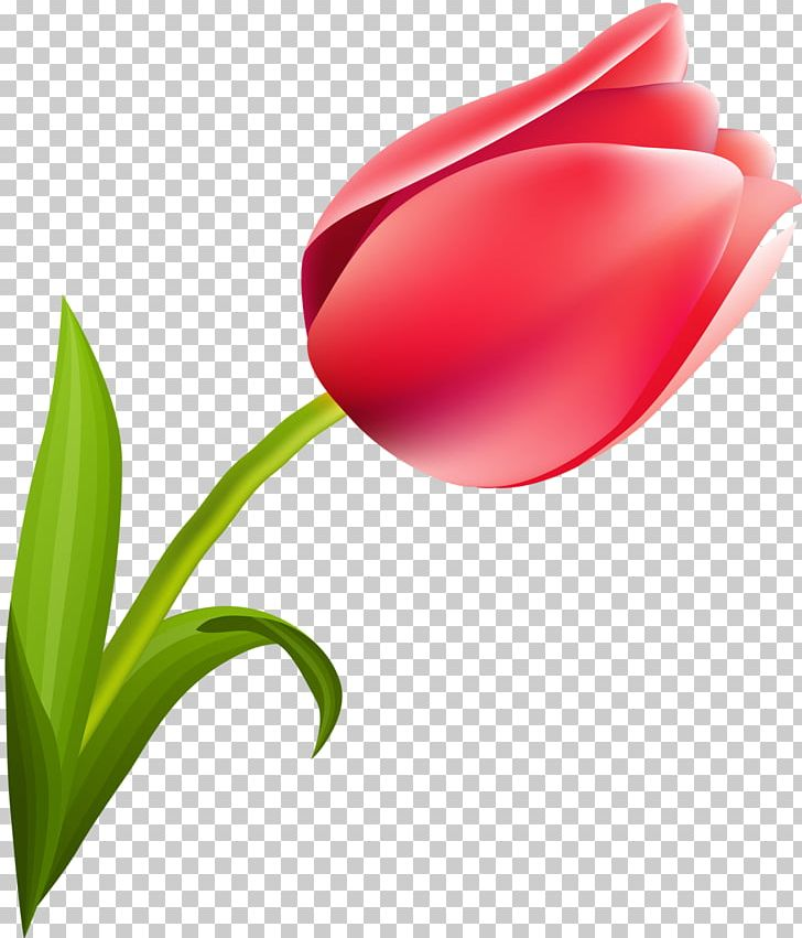 March 8 International Women's Day Woman Tulip Flower PNG, Clipart, Bud, Closeup, Computer Wallpaper, Flower, Flowering Plant Free PNG Download