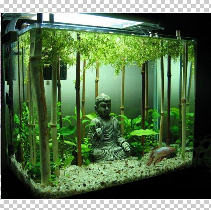 Aquascape Ideas Aquascaping Fish Tank