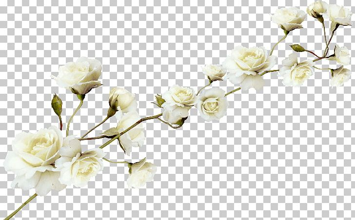Flower PNG, Clipart, Blog, Blossom, Branch, Cherry Blossom, Computer Icons Free PNG Download