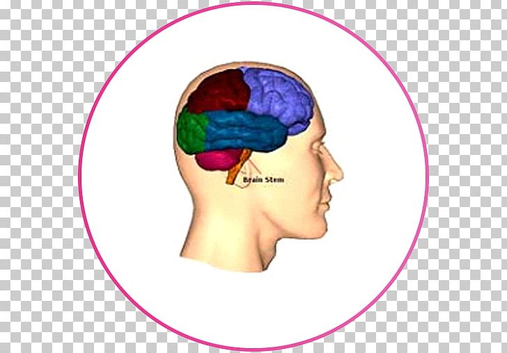 Lobes Of The Brain Frontal Lobe Injury Occipital Lobe PNG, Clipart, Acquired Brain Injury, Brain, Cerebral Cortex, Cheek, Concussion Free PNG Download
