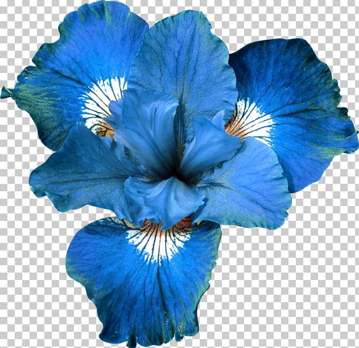 Blue Flower Garden Roses PNG, Clipart, Blue, Blue Flower, Clip Art, Color, Cut Flowers Free PNG Download