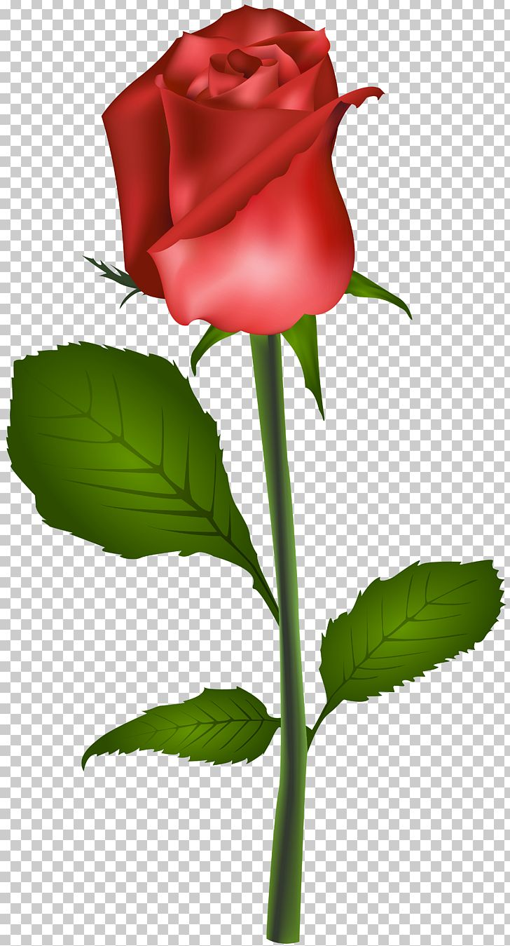 Rose Flower Red PNG, Clipart, Best Roses, Blue Rose, Bud, Camera, Clipart Free PNG Download