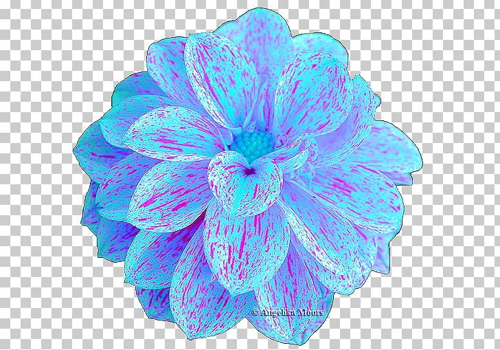 Turquoise PNG, Clipart, Aqua, Flower, Others, Petal, Turquoise Free PNG Download