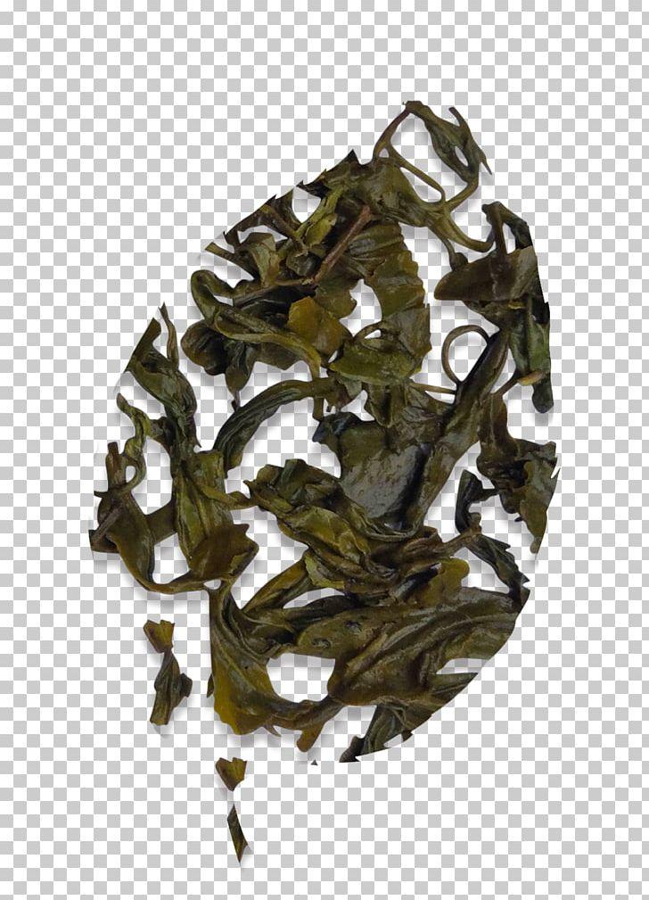 Nilgiri Tea Assam Tea Camellia Sinensis Oolong PNG, Clipart, Assam Tea, Bai Mudan, Bancha, Camellia Sinensis, Ceylon Tea Free PNG Download