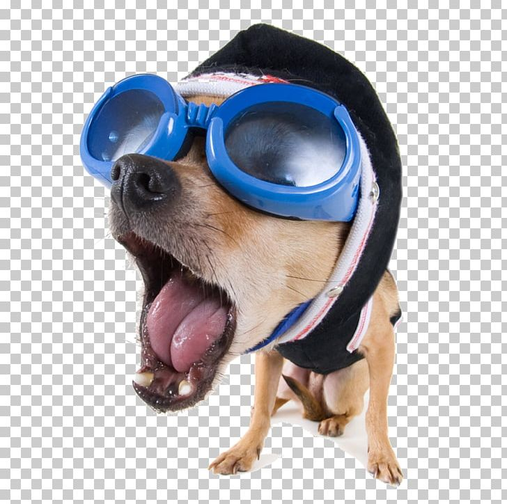 Dog Funny Animal Stock Xchng High Definition Video Png Clipart Animals Dog Breed Dog Clothes Dog