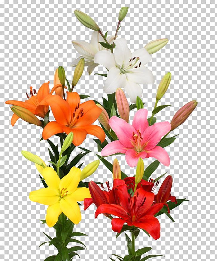 Cut Flowers Floral Design Floristry Flower Bouquet PNG, Clipart, Annual Plant, Cut Flowers, Family, Floral Design, Floristry Free PNG Download