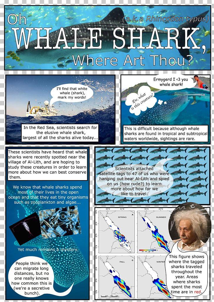 Real Life Whale Shark Life Cycle